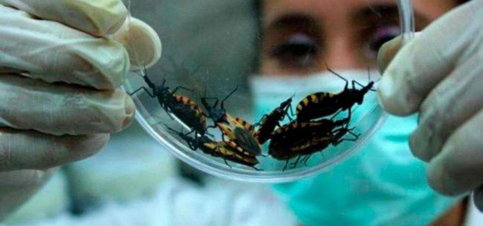 Tratamiento novedoso de la enfermedad de Chagas